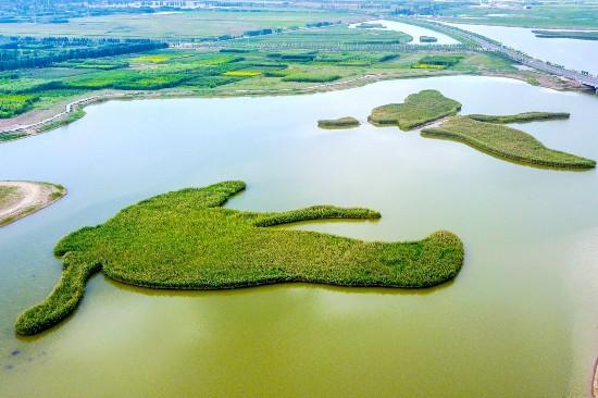 大自然的神奇!银川鹤泉湖这两处湿地造型状若飞鸟
