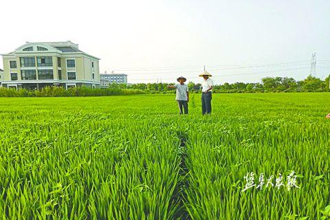 盐城盐都农业技术人员为农户指导农业技术