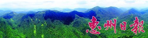 惠州古田森林如秘境 奇树奇藤奇景多