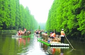 淮安金湖水上森林游客坐竹筏近距离感受水杉林