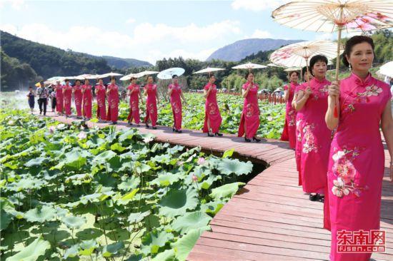 宁德霞浦畲乡荷花节吸引游客赏荷观光