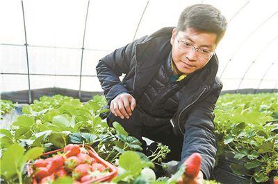"""杭州建德下涯草莓王""""红""""遍大江南北"""