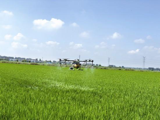 泰州周庄农场配备植保飞行器 药效提高40%以上