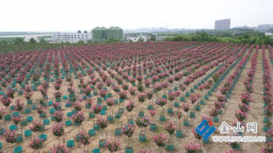 """镇江垃圾填埋场育出""""移动森林"""" 有1万多棵苗木"""