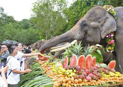 西双版纳举办世界大象日活动