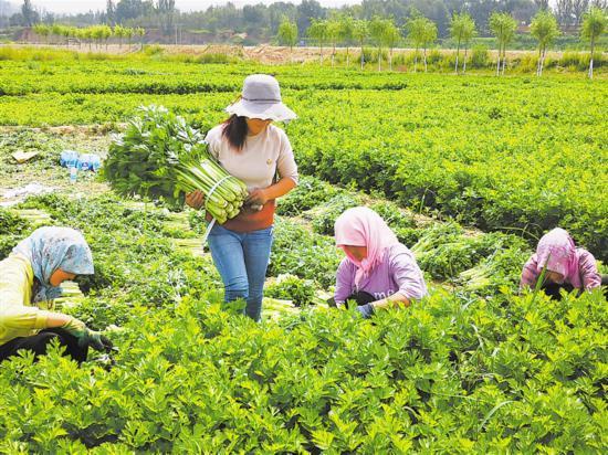 西吉:葫芦河治理农民受益