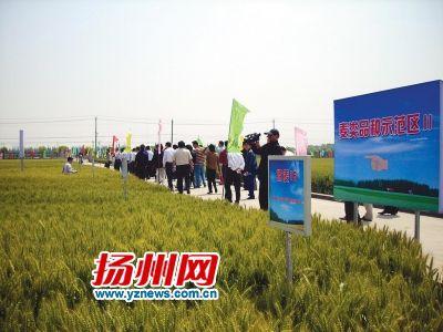 抱团闯市场让扬麦卖出好价钱 扬麦产销联合体成立