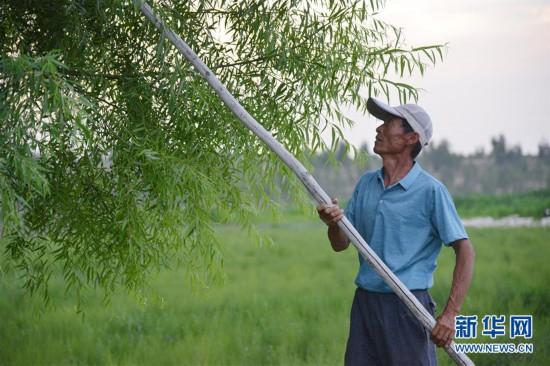 (在习近平新时代中国特色社会主义思想指引下――新时代新作为新篇章)(3)父子造林30年 林进沙退绿富同兴