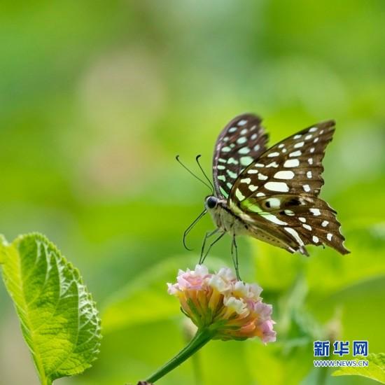 组图:福州温泉公园内昆虫戏花
