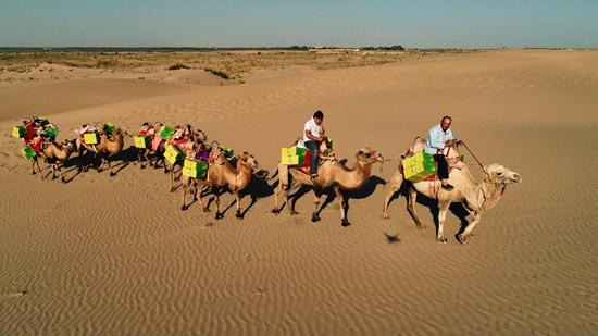 维吾尔族老人赶驼队援助绿洲瓜农