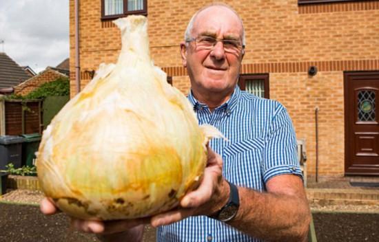 英老人种出9斤重超级洋葱 可供30人食用(图)