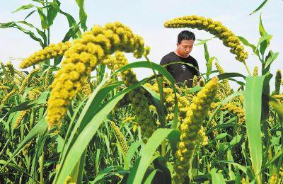 循环农业绿色发展