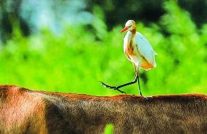 淮安盱眙着力保护良好生态 构建和谐大自然