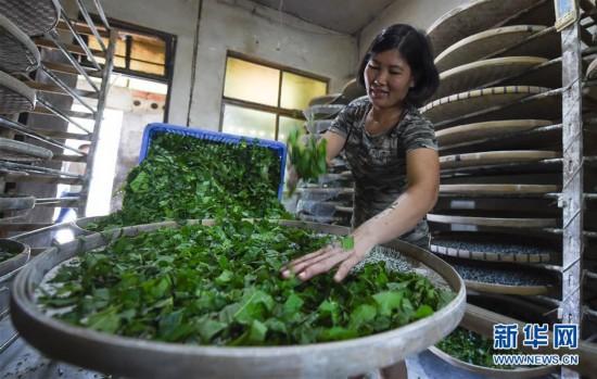 (经济)(6)海南琼中:特色产业助脱贫