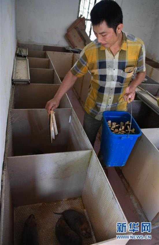 (经济)(1)海南琼中:特色产业助脱贫