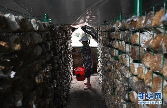 (经济)(5)海南琼中:特色产业助脱贫