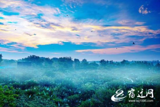 宿迁泗洪:守住生态底线 让生态经济绿意盎然