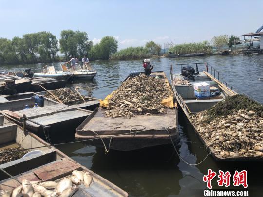 洪泽湖污水来源调查:与上游安徽两县观感一致