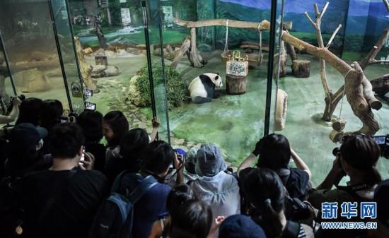 """(社会)(4)大陆赠台大熊猫""""团团""""""""圆圆""""欢度14岁生日"""