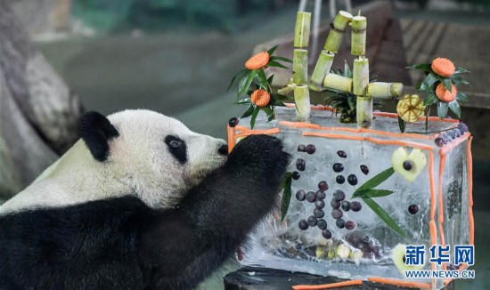 """(社会)(1)大陆赠台大熊猫""""团团""""""""圆圆""""欢度14岁生日"""