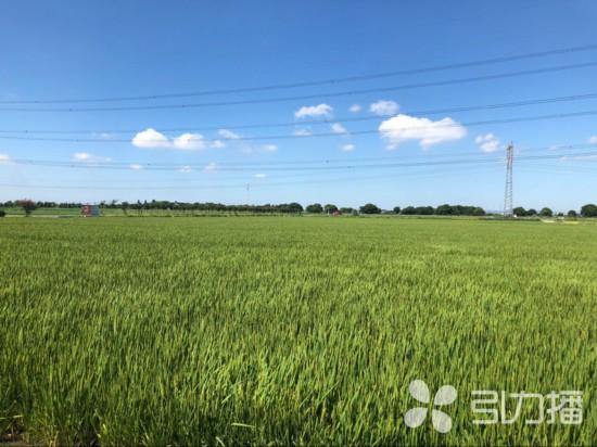苏州将在宿迁建优质粮源生产基地23万亩