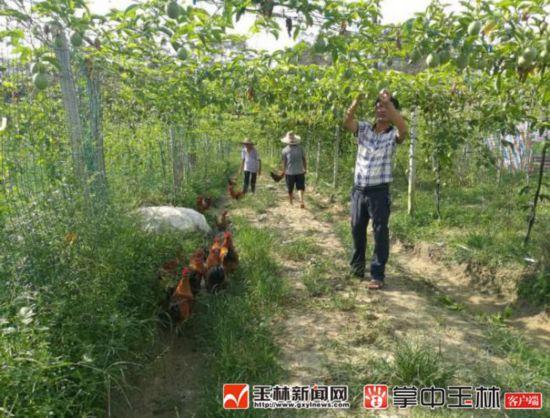 博白坡塘种养专业合作社:编织百香果环保致富梦