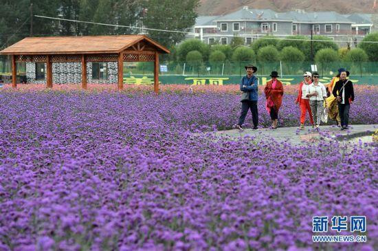 """(经济)(2)甘肃:乡村旅游让农民享受""""绿色收益"""""""