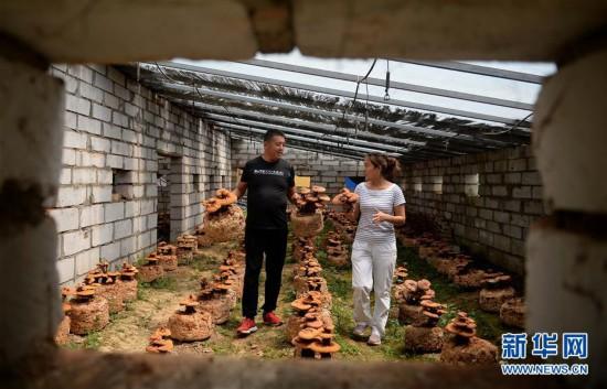 (图片故事)(1)创业者罗婵:回到大山 与乡邻共同脱贫致富