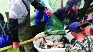 """苏州太湖秋汛开捕 """"第一网""""重2000斤"""