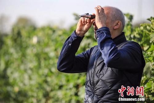 """罗斯・摩塞尔:宁夏将会成为""""亚洲的纳帕谷"""""""