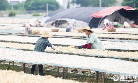 湖州:太湖开捕 梅鲚鱼丰收