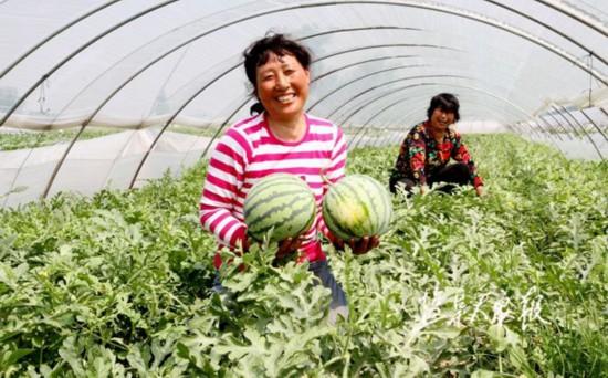 接轨上海精准发力 盐城农业高质量发展持续进阶