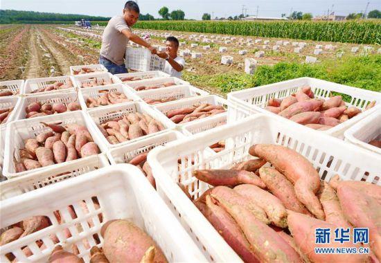 (社会)(2)河北滦南:发展特色农业促增收