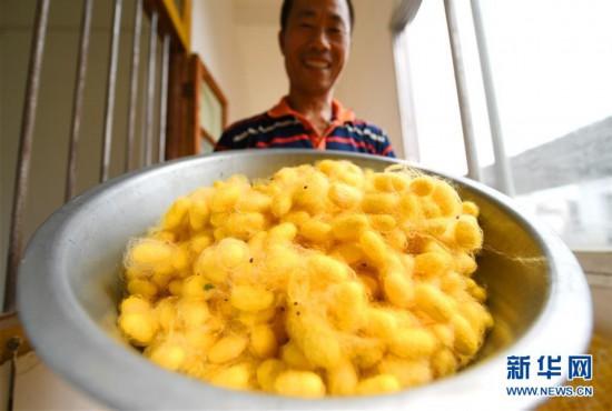 #(图片故事)(1)蚕农陈东日:我的梦想是彩色的