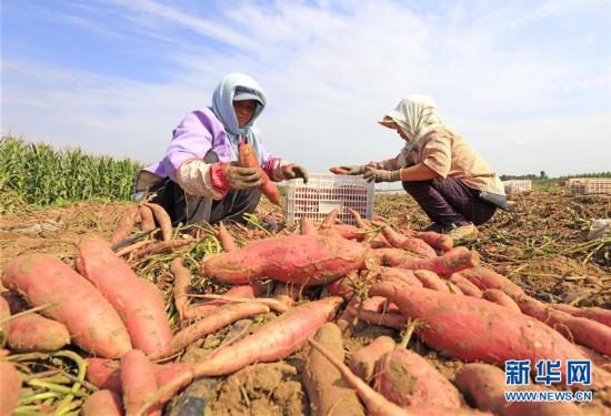 (社会)(3)河北滦南:发展特色农业促增收