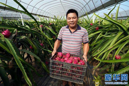 (经济)(1)农业提质 喜获丰收
