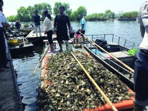 江苏洪泽湖鱼蟹死亡污染原因找到:上游泄洪夹带污水