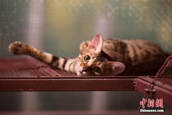 """有爱!美国老人抱猫睡觉走红 网友称其""""猫爷爷"""""""