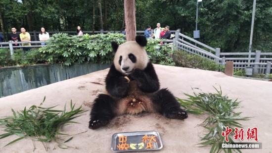 国宝大熊猫的中秋节(组图)