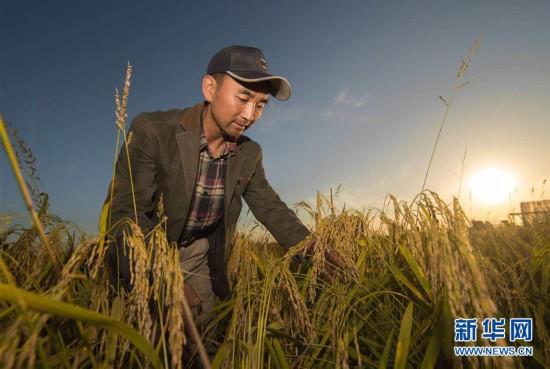 (丰收的味道)(图文互动)(1)稻人有道――种粮大户李学明的十余年坚守