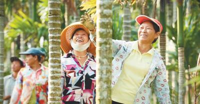 人民日报:万宁小槟榔做出大产业