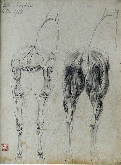 吴作人作品《马体解剖习作》纸质 炭笔