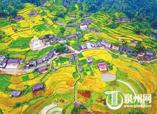 德化:秋季水稻进入成熟期 山村迎来丰收季