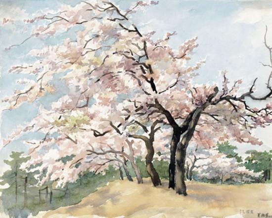 萧淑芳作品《青岛樱花》 纸质水彩 1957年作