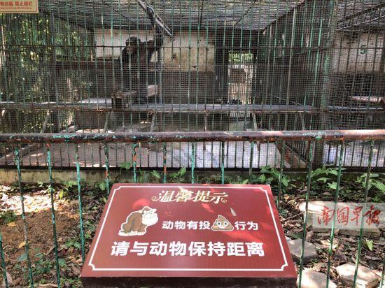 事发后,现场已布置起警戒线。 9月27日,一些游客在南宁动物园观赏黑猩猩时,一只猩猩抓起粪便扔向笼外,有的人中招。有人将此事发到微博上,引发不少网友关注。29日,南宁动物园回应称,园方已经采取多种措施,防止此类事件再次发生。 1 网友讲述:被猩猩用粪便袭击 南宁动物园环境差,动物脏,猩猩区里的猩猩还拿自己的粪便扔向游客,行为极其恶劣!旁边也没有告示牌提醒游客,也不见巡逻人员。9月27日晚,微博网友@BLACK很可爱称,自己去该动物园看猩猩时就中招了,她向园方投诉后获得退票。这名网友还说:我认为猩猩很
