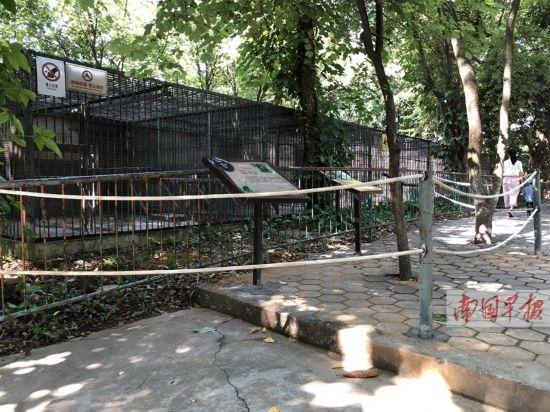 """游客在南宁动物园里看猩猩 却遭""""猿粪""""袭击(图)--广西"""