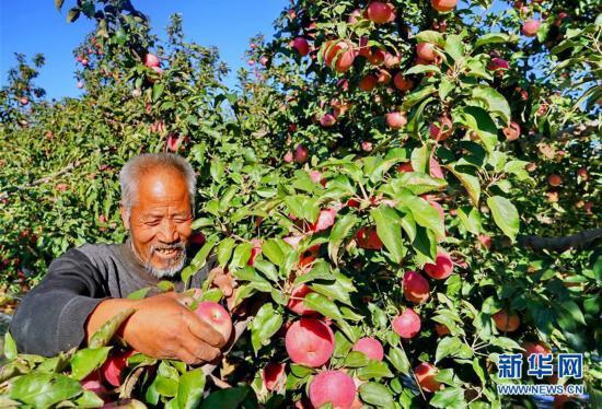 (经济)(3)果树满坡富农家