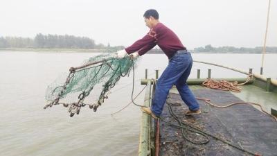 長江揚州段江蟹將開捕 有人出江試捕到5.7兩公蟹