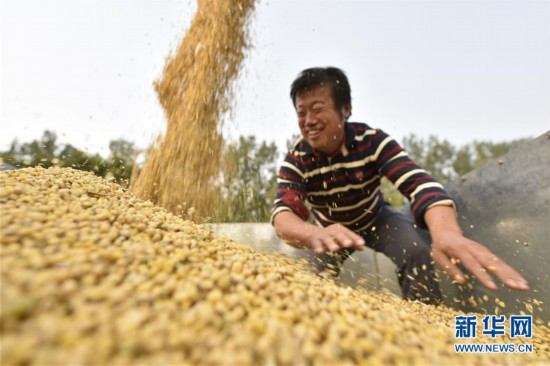 #(经济)(1)山东聊城:家庭农场托管大豆收获忙