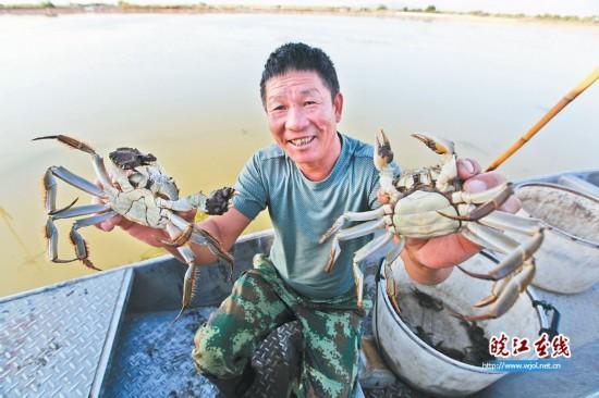 生态养殖螃蟹丰收-王文生.png